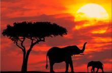 Kenya elefante