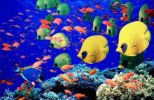 pesci-gialli